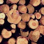 Аномально теплая зима сыграла на руку застройщикам: плюсовая температура позволила им нарастить объемы строительства. Но, как выясняется, из-за отсутствия снега в лесах уже весной стройматериалы из дерева подорожают минимум на 50%. По мнению участников рынка, это может привести к тому, что анонсированная правительством программа малоэтажного строительства так и не сдвинется с мертвой точки, пишет газета «Бизнес».